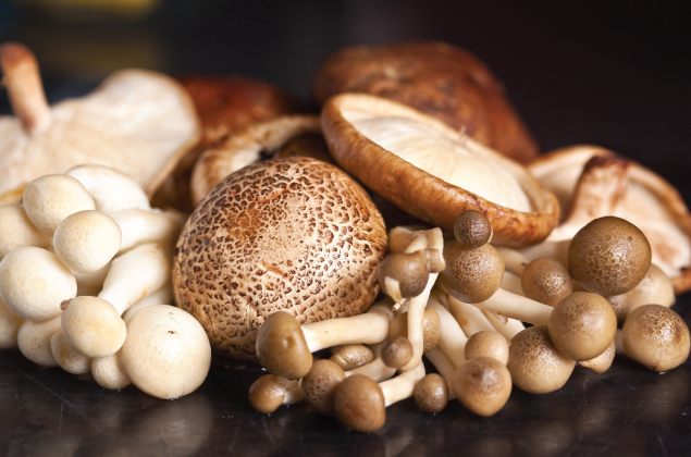 Mushroom_Cultivation