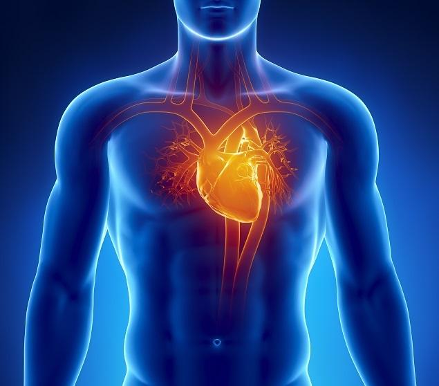 Webshutterstock_112082681(heart)